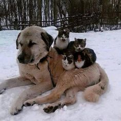 Yep, cats are simply users. I guess they couldn't convince a human to lie in the snow for them!  ..>cjk