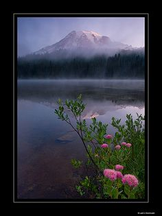 Rainier Garden by lalit deshmukh, via Flickr