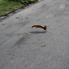 #eichhörnchen im #clarapark #leipzig2015