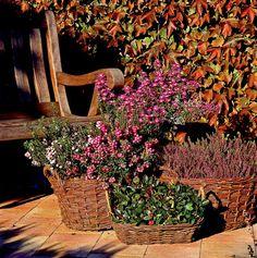 Pflanzen für den Herbst