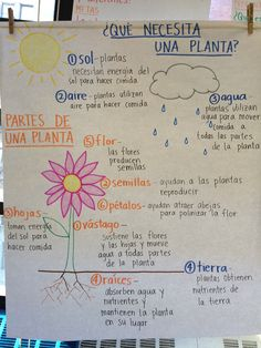 anchor chart in spanish parts of a plant / partes de una planta Preschool Spanish, Spanish Teaching Resources, Elementary Spanish, Science Resources, Spanish Lessons, Science Lessons, Spanish Class, Dual Language Classroom, Bilingual Classroom