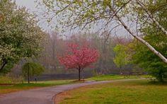 jardín, parque, carretera, árboles, paisaje