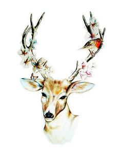 #illustration #painting #deer