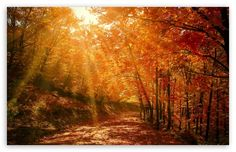 Beautiful Nature Image, Autumn, Forest wallpaper