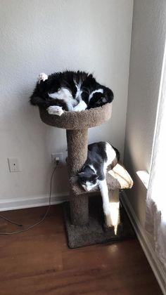 De doll video Cat pussy