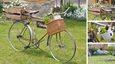 bicycle, garden, flower