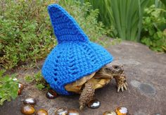 Halloween is for animals too!   Funniest animal costumes
