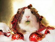 Christimas rabbit