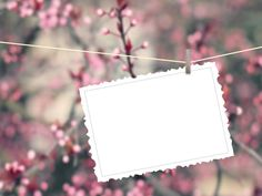 Close-up of one hanged postcard with peg on pink flowers out of focus background Old Paper Background, Scrapbook Background, Flower Background Wallpaper, Flower Phone Wallpaper, Frame Background, Flower Backgrounds, Wallpaper Backgrounds, Photo Collage Design, Photo Frame Design