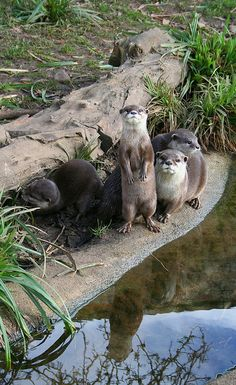 Otter family>>> I love the water reflection.