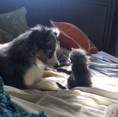 Kittie and doggie http://ift.tt/2CaMNeK