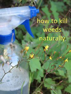 """Natural weed killer recipe - Combine 2 cups of vinegar with ½ cup table salt in a spray bottle, add a dash of liquid dish soap to it. Mix well to dissolve the salt. Set spray nozzle to """"stream"""" rather than """"mist"""" and aim for the base of the weed. Spray on a hot sunny day, avoid spraying on windy days as it can kill plants too. Your weeds will usually die within a week, if not, reapply."""