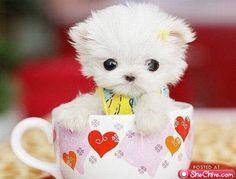 puppppyy