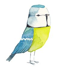 """rough trade shops: Our Garden Birds - An Exhibition by Matt Sewell (""""I can do a blue tit with my eyes closed"""")"""