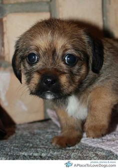 """lovin those big eyes and the teeny tiny little white """"beard"""" on the chin."""