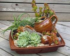 10 Mini Garden Ideas, Most of the Brilliant as well as Beautiful 10 Mini-Garten-Ideen, die meisten b Succulents In Containers, Cacti And Succulents, Planting Succulents, Cactus Plants, Cactus Flower, Air Plants, Mini Cactus Garden, Flowering Plants, Container Flowers