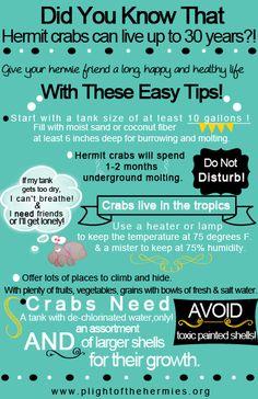 ♥ Pet Care ♥ our cheat sheet for all the basics on hermit crab care. Hermit Crab Cage, Hermit Crab Homes, Hermit Crab Habitat, Hermit Crabs, Classroom Pets, Class Pet, Paludarium, Vivarium, Thing 1