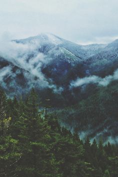 Landscape Photography | Blue mountains green forests and grey morning fog