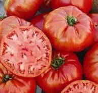 SEE OUR STORE FOR OVER 80 TYPES OF TOMATOES! LINCOLN ADAMS TOMATO RARE HEIRLOOM