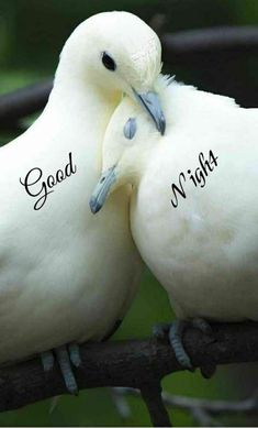 Good Night Images For WhatsApp - Cute Good Night Images Good Night For Him, Good Night Thoughts, Good Night Love Quotes, Good Night Prayer, Cute Good Night, Good Night Blessings, Good Night Sweet Dreams, Good Morning Good Night, Romantic Good Night Image