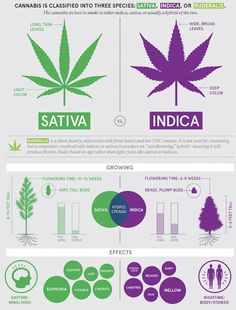step by step guide teaching you everything you need to know when it comes to choosing the best cannabis strains to treat your symptoms or to satisfy your needs when it comes to using marijuana. best strains for cannabis cooking and growing. Cannabis Edibles, Cannabis Oil, Medical Cannabis, Weed Types, Indica Strains, Sativa Or Indica, Medical Marijuana, Weed, Stoner Humor