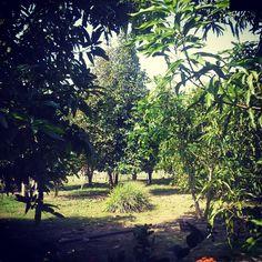 #naturaleza Plants, Naturaleza, Fotografia, Photography, Plant, Planets