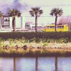 De amarillo y palmeras