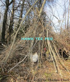 Provide hiding spots for free-range chickens around the property. Free-range birds benefit by having natural and artificial cover from predators. Bushes, branches, pallets, etc. Anything nearby that they can dash underneath when danger looms above will work.