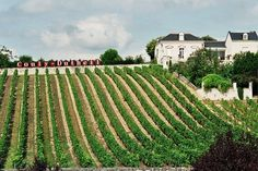 Les vignes de Couly-Dutheil à #chinon