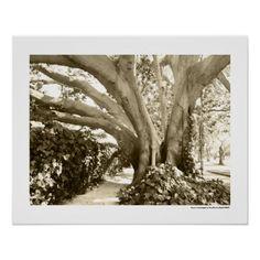 Sepia Big Tree Photography California LA Poster - decor gifts diy home & living cyo giftidea
