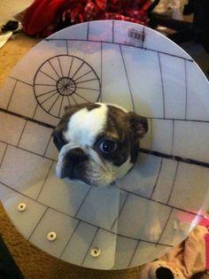 Death Star Dog Cone of Shame.