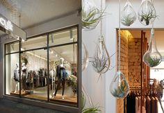 Cylk Retail Flagship store - Shopfront design & suspended custom glass terrariums Glass Terrarium, Terrariums, Custom Glass, Shop Front Design, Retail, Street, Room, Shopping, Furniture