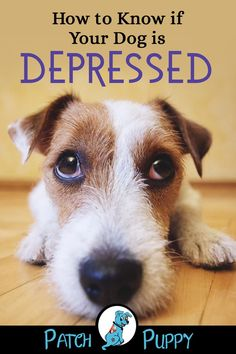 How to Know if Your Dog is Depressed How to Know if Your Dog is Depressed,Dog Care Fact is, they feel safer in small enclosures while resting, so it is my opinion that it. Dog Health Tips, Dog Health Care, Cat Health, Dog Care Tips, Pet Care, Care Care, Pet Tips, Emergency Vet, Tips