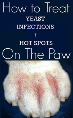 Hot to Treat Smelly Bulldog Paws