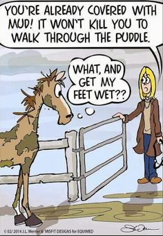 Is this your #horse?