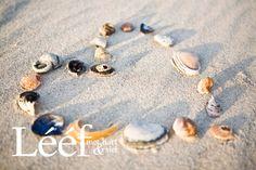 Skulpe Sea Shells, Pearl Earrings, Beaded Bracelets, My Love, Pictures, Hearts, Jewelry, Teacher, Random