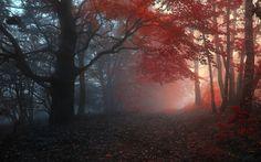 fall nights