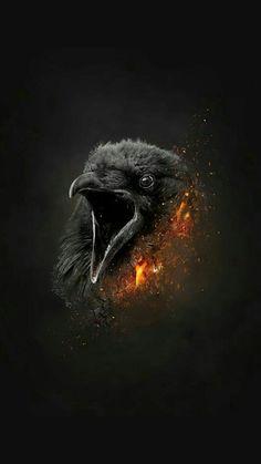 Ace Crow Art, Raven Art, Bird Art, Poetry Wallpaper, Animal Wallpaper, Wallpaper Backgrounds, Wallpapers, Dark Fantasy Art, Rabe Tattoo