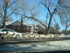Gang problem in Cheyenne, WY!