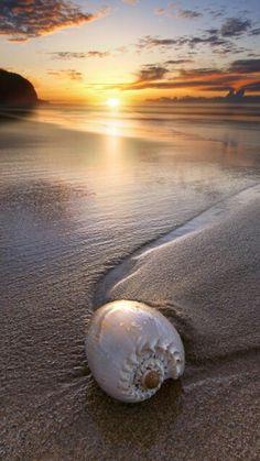 Beautiful Sunset, ocean , sea shell ♥ by herland I Love The Beach, All Nature, Amazing Nature, Pics Art, Ocean Beach, Beach Sunsets, Shell Beach, Sunset Beach, Beach Bath