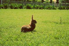 """""""Di' un po', hai un #coniglio in tasca o sei contento di vedermi?"""" """"Is that a #rabbit in your pocket or are you just happy to see me?"""" Dolores (Joanna Cassidy), in Chi ha incastrato Roger Rabbit, 1988"""