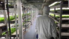 Ιάπωνες στήνουν το πρώτο ρομποτοποιημένο αγρόκτημα στον κόσμο