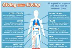 Organ Donation Infographic - http://infographicality.com/organ-donation-infographic/