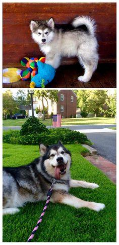 Nika will be Six years old tomorrow! http://ift.tt/2sPuB93
