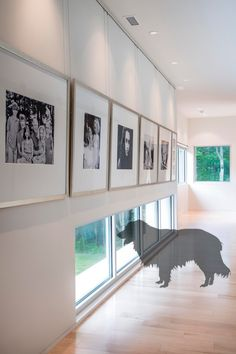 Dog Windows - Find out on the blog today how strategic window placement in your home can actually help lower your dog's stress level.