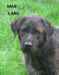 MAX   Type : Griffon Sexe : Mâle Age : Adulte Couleur : Noir  Taille : Petit Lieu : Tarn-et-Garonne - 82 (Midi-Pyrénées)  Refuge :  S.P.A. du RAMIER(Tarn-et-Garonne) Tél : 05.63.20.80.32