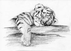 # Tiger Tattoo # Tattoo Tattoos polynesischen Stammes, römischen Engel Tattoo, Aquarell t . Animal Sketches, Art Drawings Sketches, Animal Drawings, Tattoo Drawings, Cute Drawings, Pencil Drawings, Pencil Art, Tiger Tattoo Small, Small Tattoos