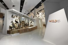 Wild Melbourne Museum. #exhibit