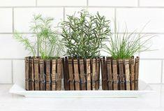15 Ideas para decorar nuestra casa con plantas, cactus y crasas