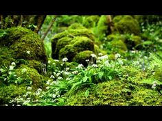 ▶ 8 hours Nature Sounds-Birds Singing- Waterfall-Birdsong-Sound of Water-Relaxation-Meditation - YouTube